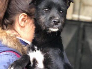 Terrier melezi 4 aylık fino kızımıza ömürlük yuva