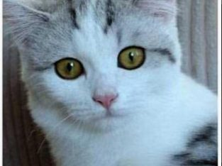 Karlar kraliçesi yeni sahibini arıyor – Ankara