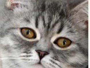 kendi halinde sessiz bir kediyim – Ankara