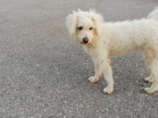 Tahminen 5-6 aylık terrier cinsi dişi köpek yuva a