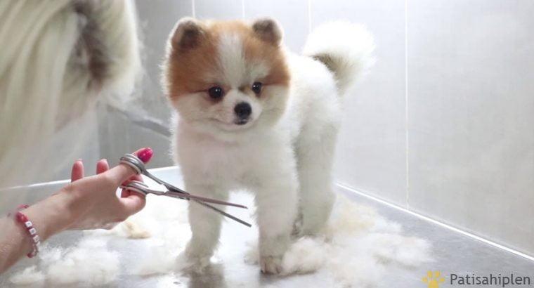 Irkının en iyisi teddybear