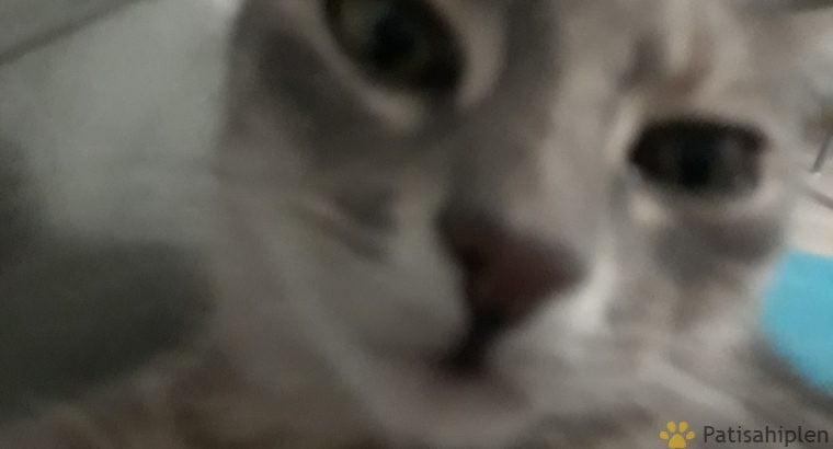 Dünyanın en uysal kedisi