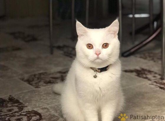 Tertemiz ev kedisi