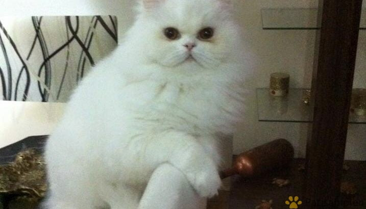 Sevimli kedim yuvasını arıyor