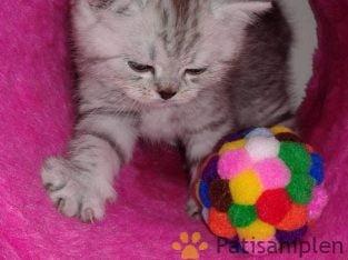 dünyalar güzeli kedime ücret karşılığı yeni aile