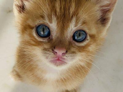 1 aylık kedi sahiplenme