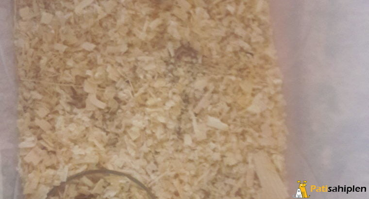 3 Aylık Ele Alışkın Yavru Hamster