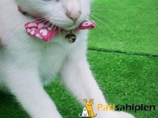 Ankara kedilerimiz