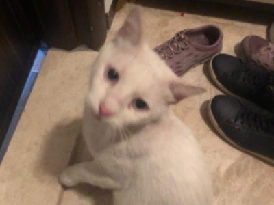 Sokağa atılmış 3 yaşında erkek kedi