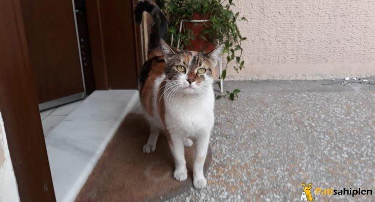 Sokağa atılmış kedilere yuva arıyoruz