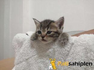 7 tane kedimiz mevcuttur parazit aşıları tamamdır
