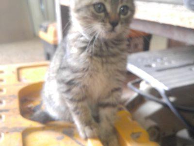 15 aylık yavru kedi ataşehir