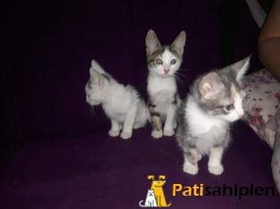 Acil 3-4 aylık kediye yuva arıyoruz