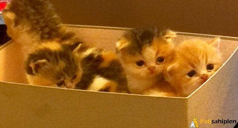 Foldex cinsi bebekleri