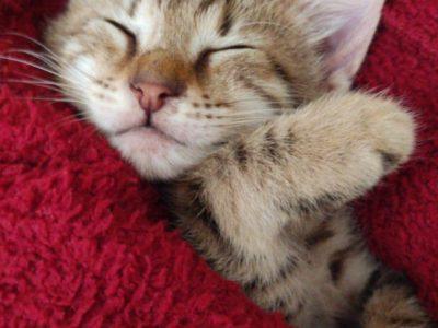 2 aylık yavru kedi