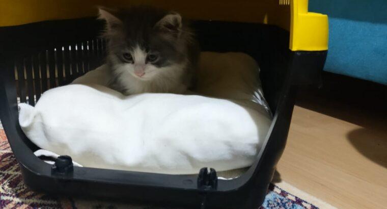 Kedimiz yeni yuvasını arıyor