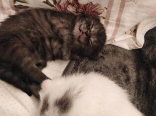 yavru kedilerimiz yeni ailelerini arıyor