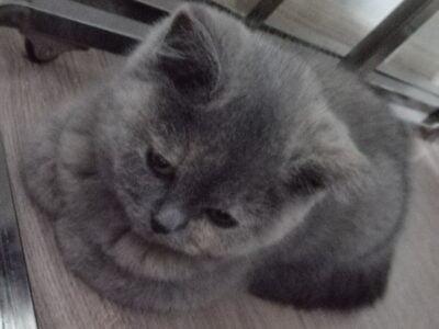 Yavru kedi 3 aylık