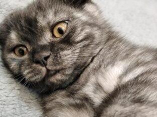 Yavru kedi 3 aylık güzel bir ayle arıyor