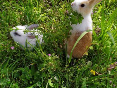 Çok sevimli yavru tavşanlar