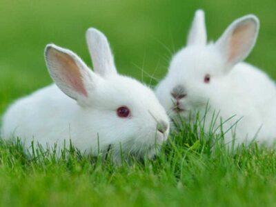 Tavşan Almadan Önce Bilmeniz Gerekenler