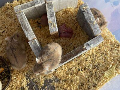 Yeni doğmuş 5 adet yavru
