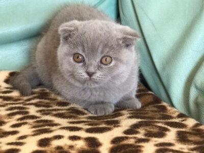 Duman kedim kayıptır bulana 100.000 TL ödül