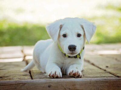 Türkiye'de Bakılması Yasak Olan Köpek Irkları