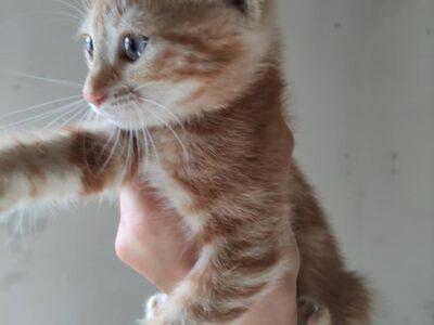 Sarı dişi kedi