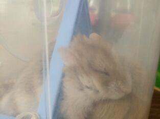 Hamster gonzales ve malzemeleri