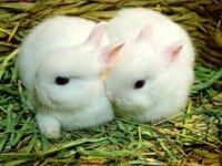 istanbul tavşan üreticisi