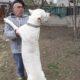 Çiftlik Garantisiyle Dogo Yavrularimiz