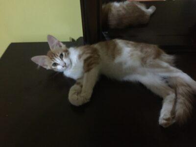 8 Adet çok sevimli yavru kedi.