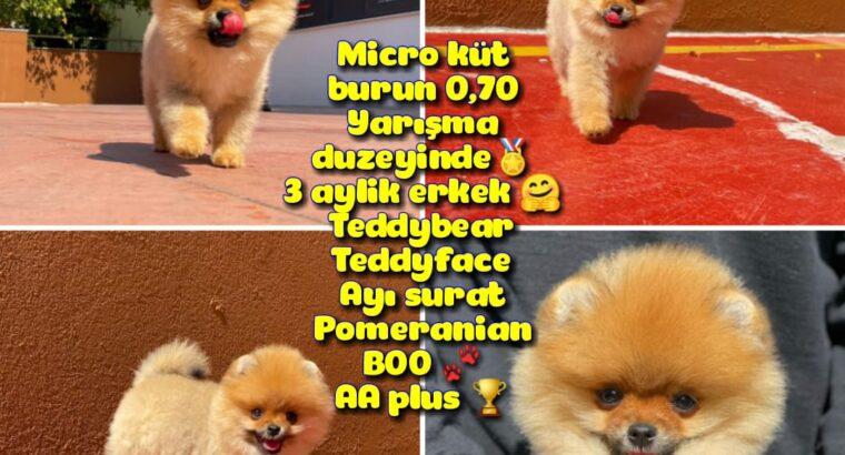0,70 Mikro Küt Burun Teddyface Ödül Adayı AA Plus