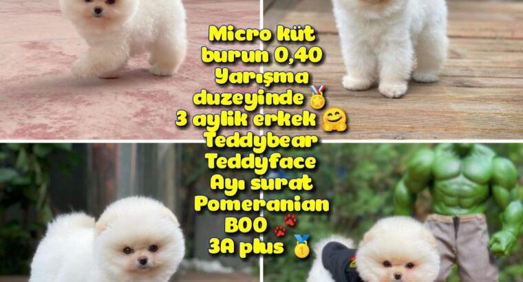 0,40 Mikro Küt Burun Teddyface Ödül Adayı AA Plus