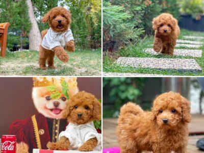 Teddy bear boo yavrumuz archill