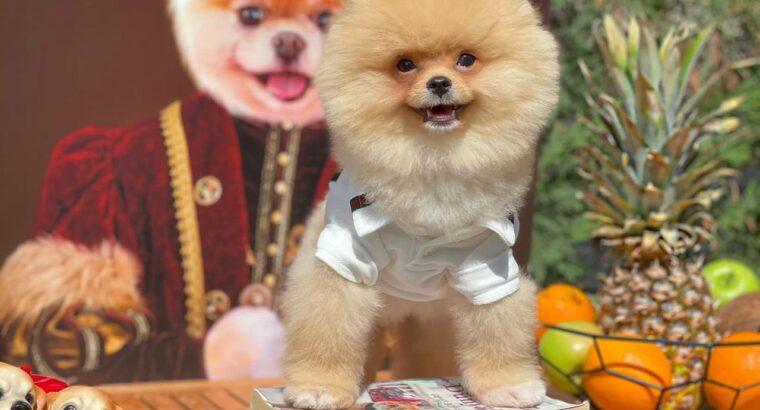 Teddy bear smile face yavrumuz